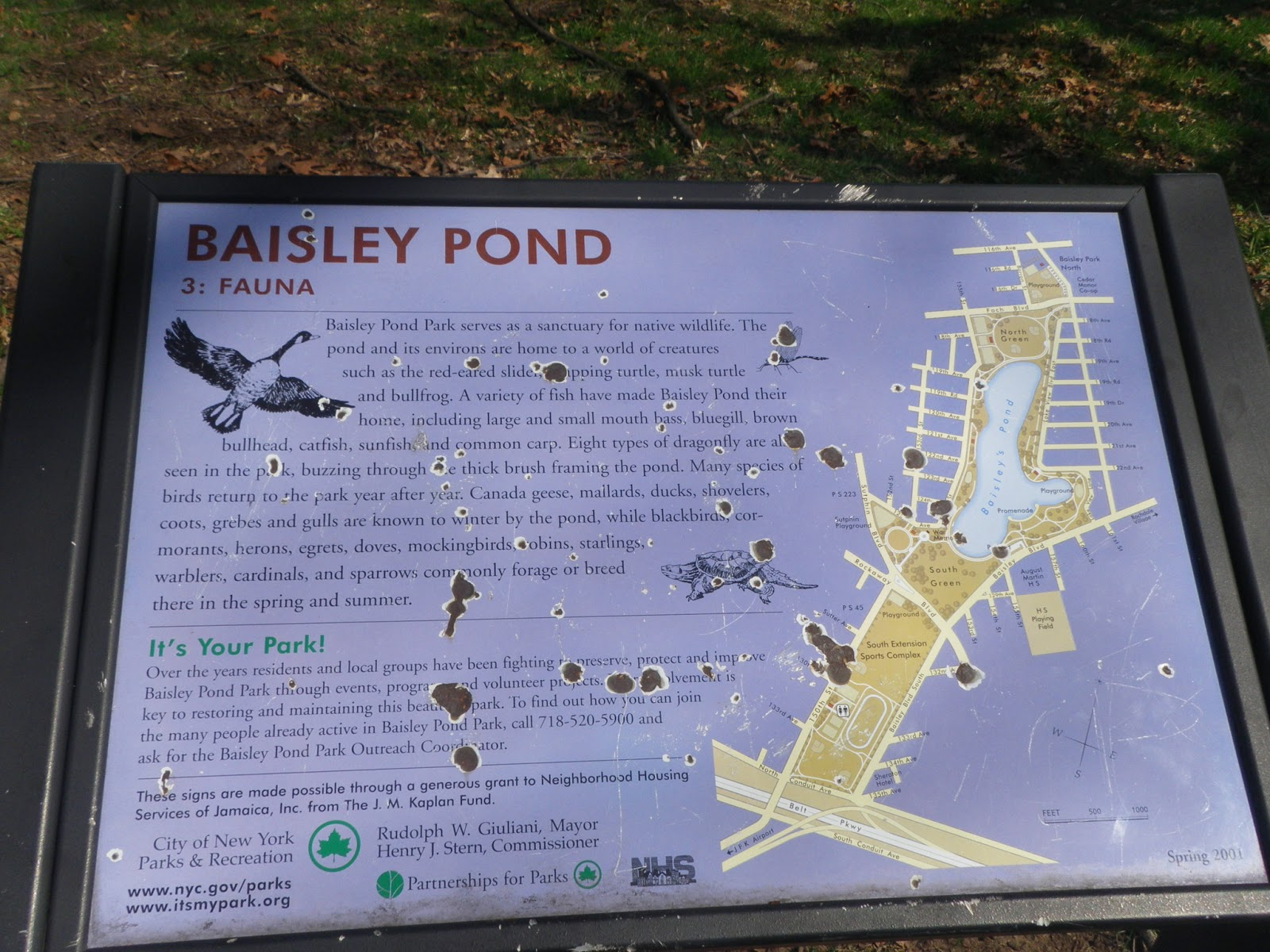 baisley pond has small mouth bass