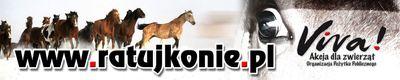 pomóżmy koniom