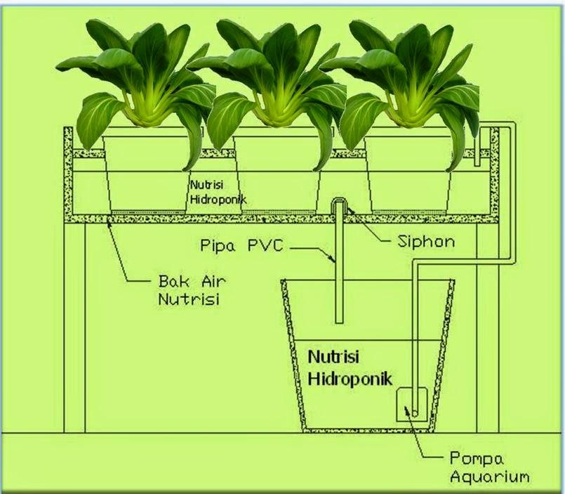 hidroponik sistem pasang surut Ebb and Flow