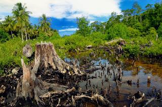 Akibat Penebangan Pohon di Hutan