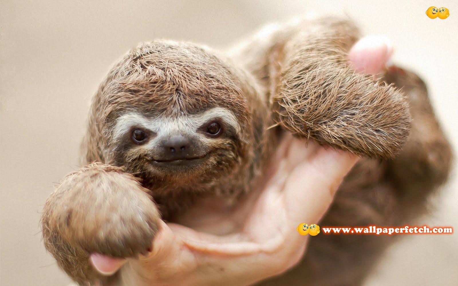 http://4.bp.blogspot.com/-nsAdbChWvvc/T1SS86ISsdI/AAAAAAAANVE/injmlB8m6Zw/s1600/sloth-baby-11213-1920x1200.jpg