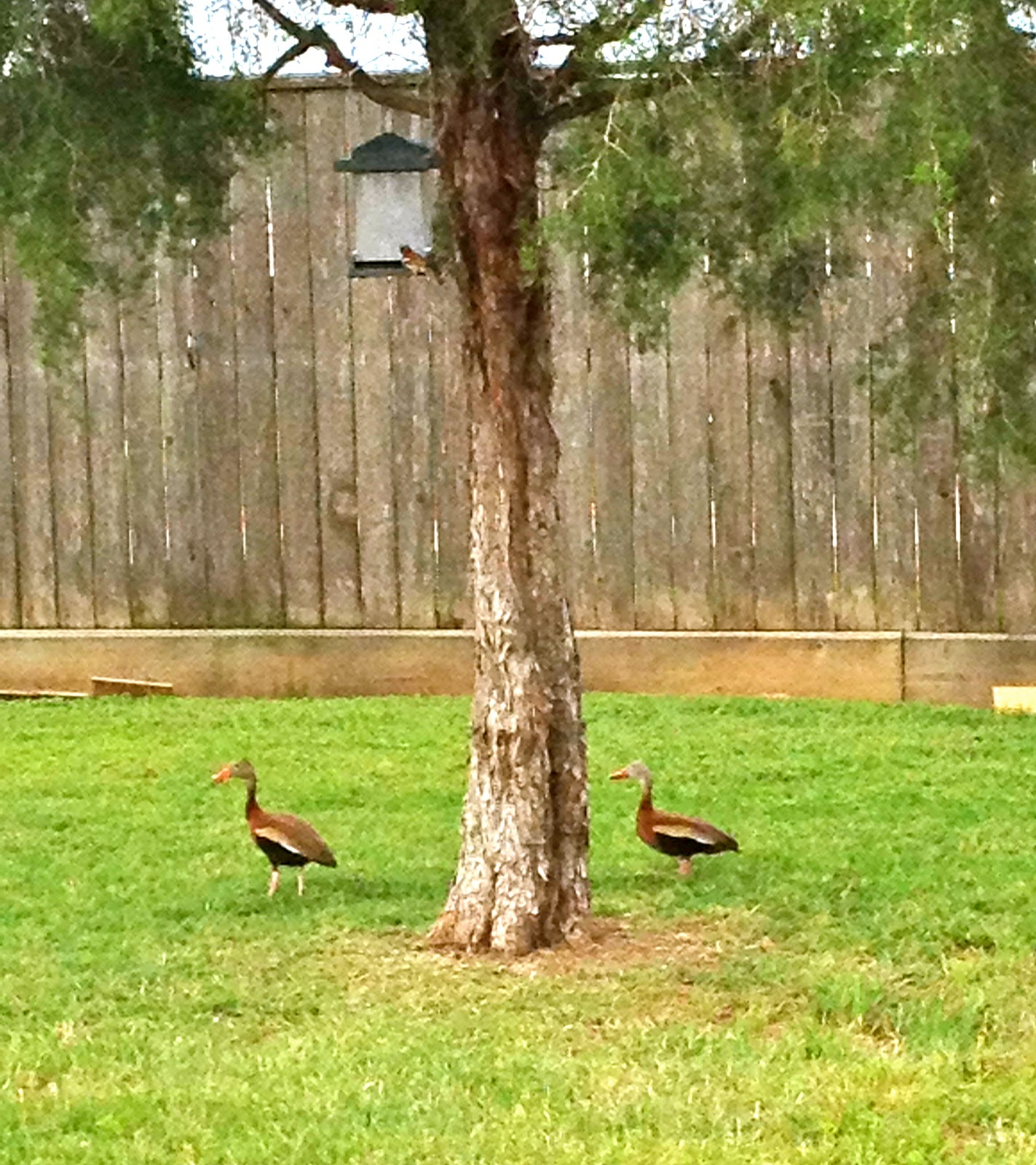 Backyard Bird Sanctuary: The Ringley Family Circus: How I Became The Crazy