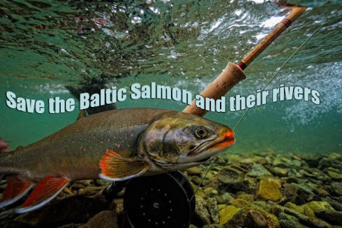 STÖTTA SAVE THE BALTIC SALMON