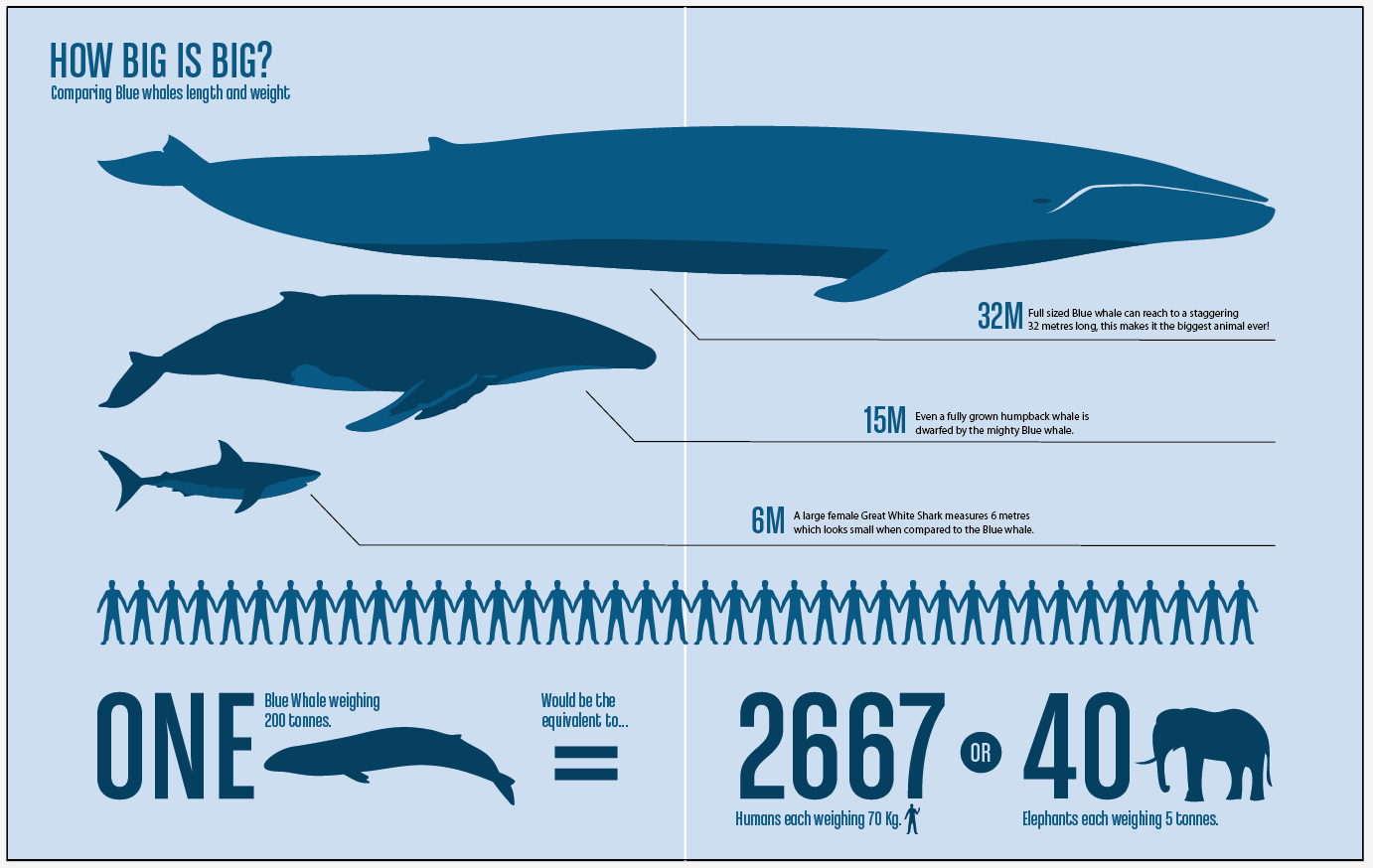 the Biggest Whale in the World!  YouTube
