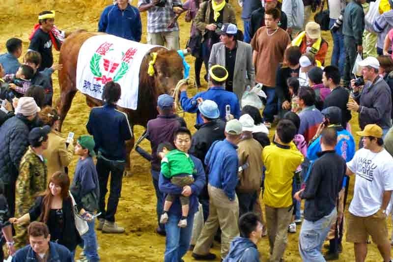 fighting bull, crowd
