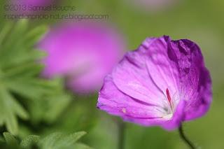 photo en fleur jardin coloré