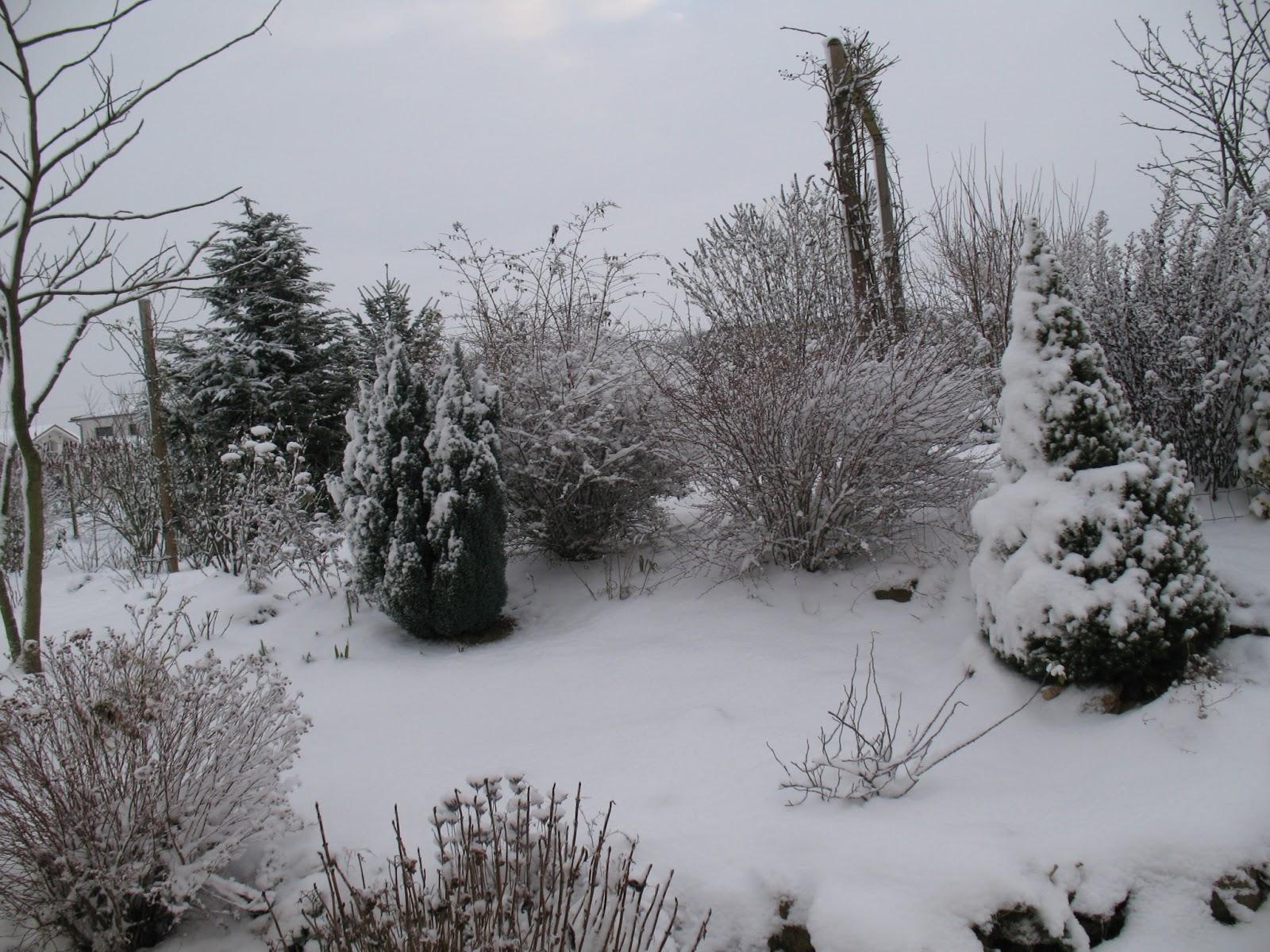 Roses du jardin ch neland le jardin sous la neige for Beau jardin en hiver