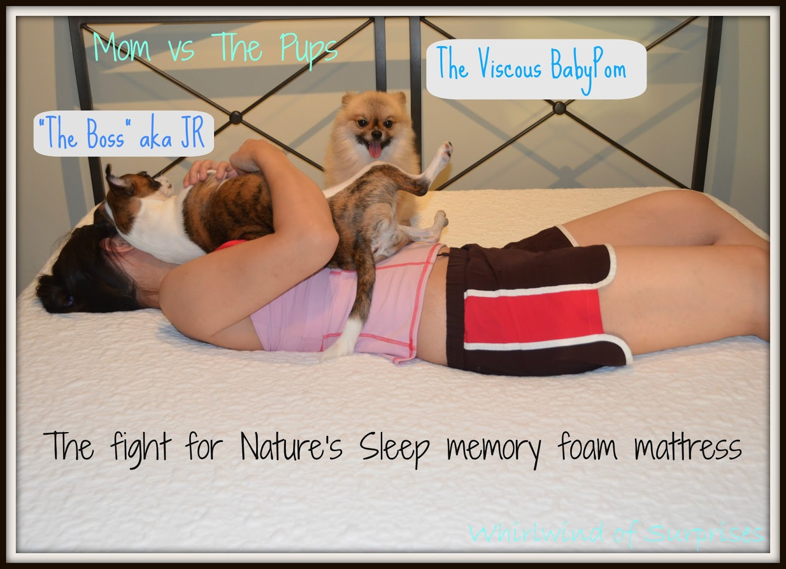 mom vs the pups see what sleep - Natures Sleep