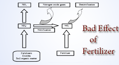 effect of fertiliser on fruits and plants experiment Able and absorbed by the plants the effect of increased n on fruit malformation should  important aspects of this experiment were that fertilizer n.