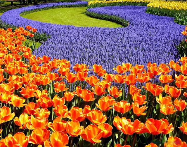 Καλη πρωτομαγια - τα λουλούδια βοηθούν