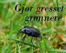 Få en gressplen uten mose;