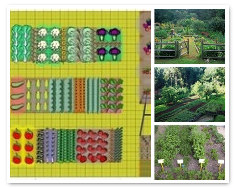 Pinning the perfect vegetable garden new house new home for The perfect vegetable garden