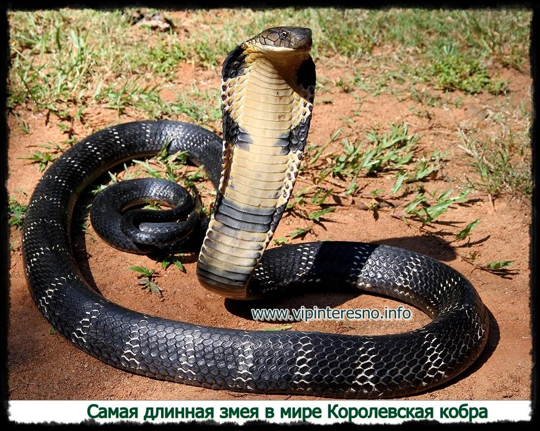 Самые красивые змеи мира