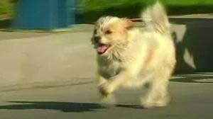 Xiao Sa, Anjing Lucu Penjelajah 1700KM China-Tibet
