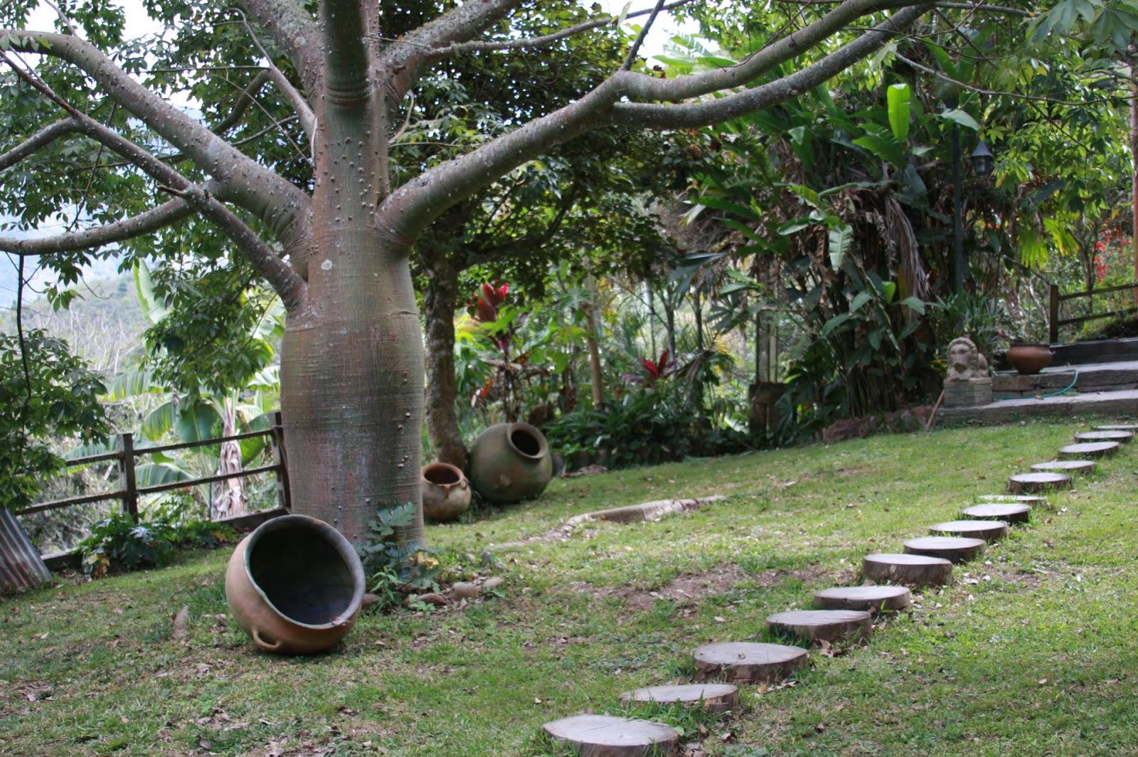 Pecabol inmobiliaria for Arboles frutales para jardin