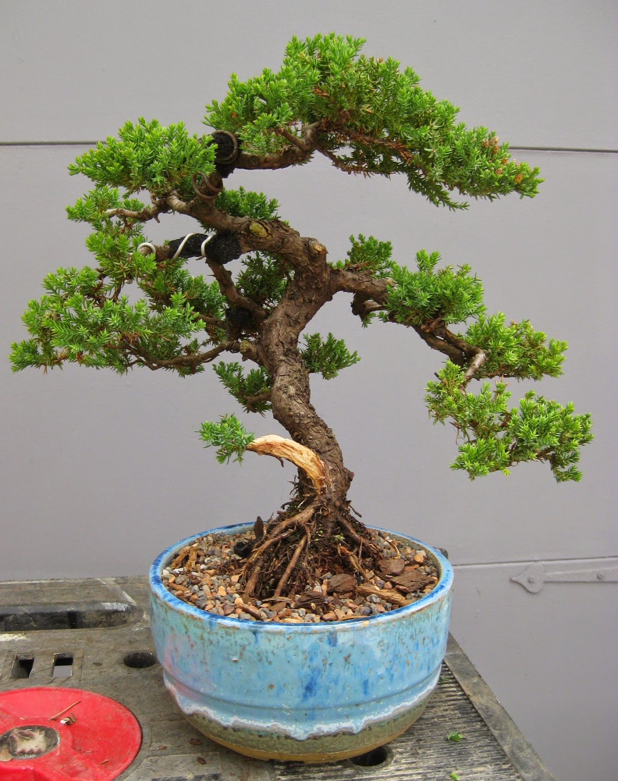 Akron Canton Bonsai Society Classic Bonsai Styles And Finding