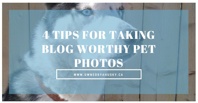 4 Tips For Taking Blog-worthy Pet Photos