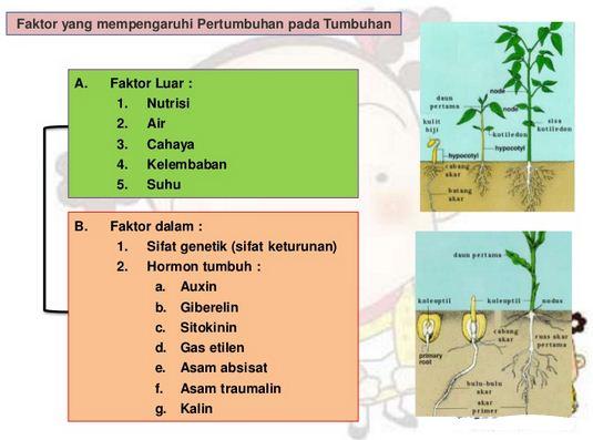 Faktor-Faktor yang Mempengaruhi Pertumbuhan dan Perkembangan pada Tumbuhan