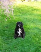 Cady 3/15/98 - 11/23/13