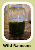 Wild Ramsons Pesto