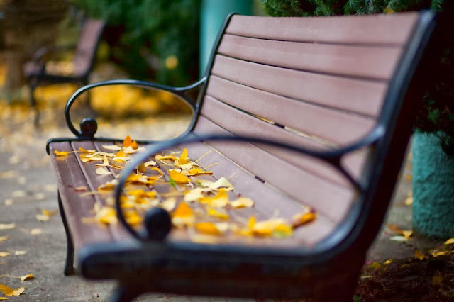 осенние жёлтые листья на скамейке