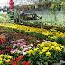 Bunga - Bunga Cinta Yang Mempersona