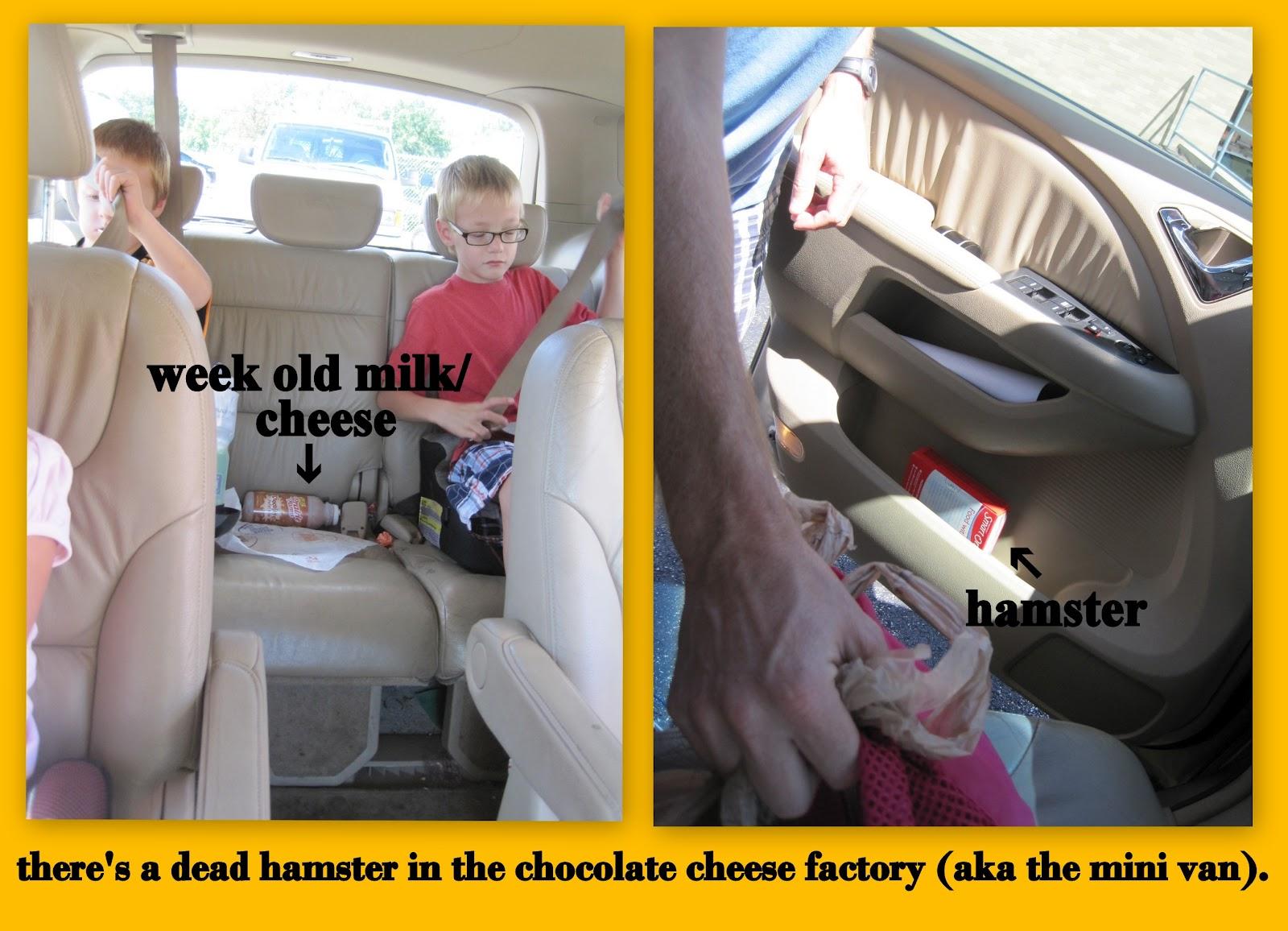 http://4.bp.blogspot.com/-nx4vAgSCmf4/UE4_zsYqM3I/AAAAAAAAEBA/tne2e_Ps99o/s1600/hamster+milk.jpg
