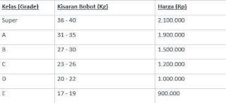 daftar harga kambing qurban