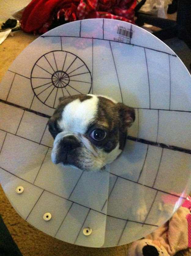 dog cone of shame, Death Star, Star Wars