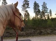 Hevostilan hetkiä