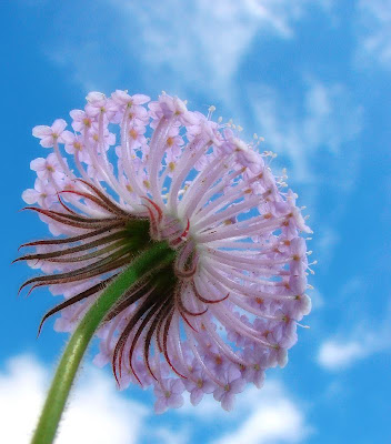 closeup flower photography