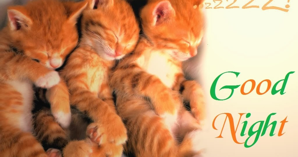 Funny Animals Good Night Cards Wallpapers Photos Festival Chaska