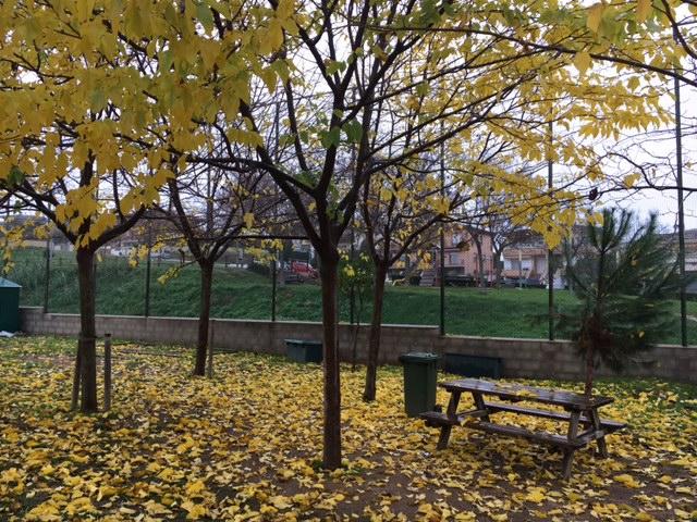 Cauen les fulles...