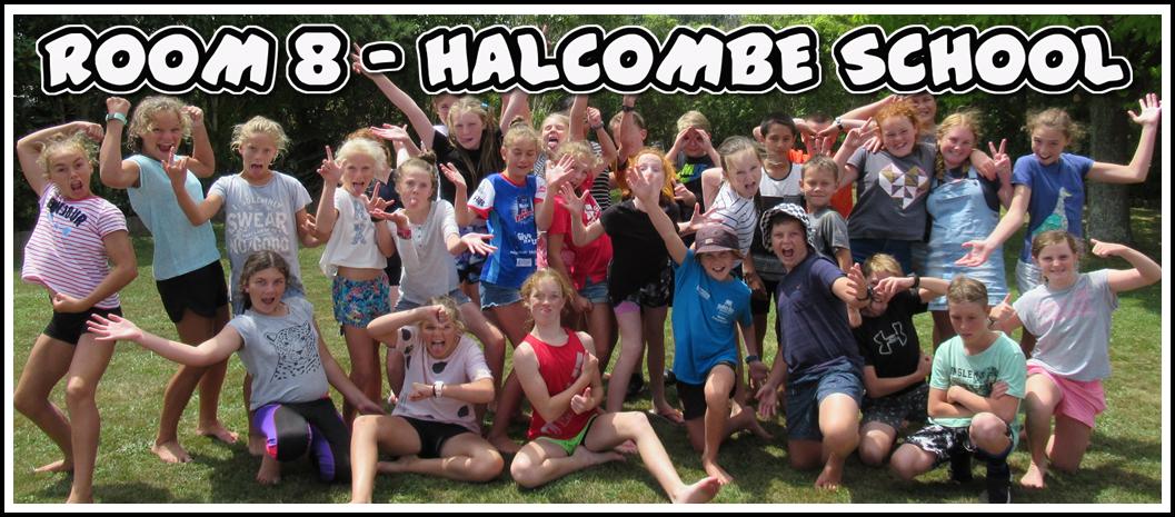 Room 8 - Halcombe School - 2019