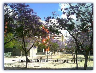 Alameda dos Jacarandás, Lisboa, com as árvores floridas.