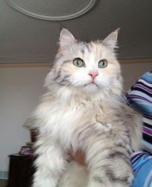 Opal, kucing yang menyelamatkan majikannya dari kebakaran