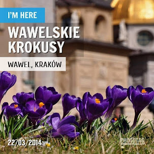 Wawelskie krokusy 2014