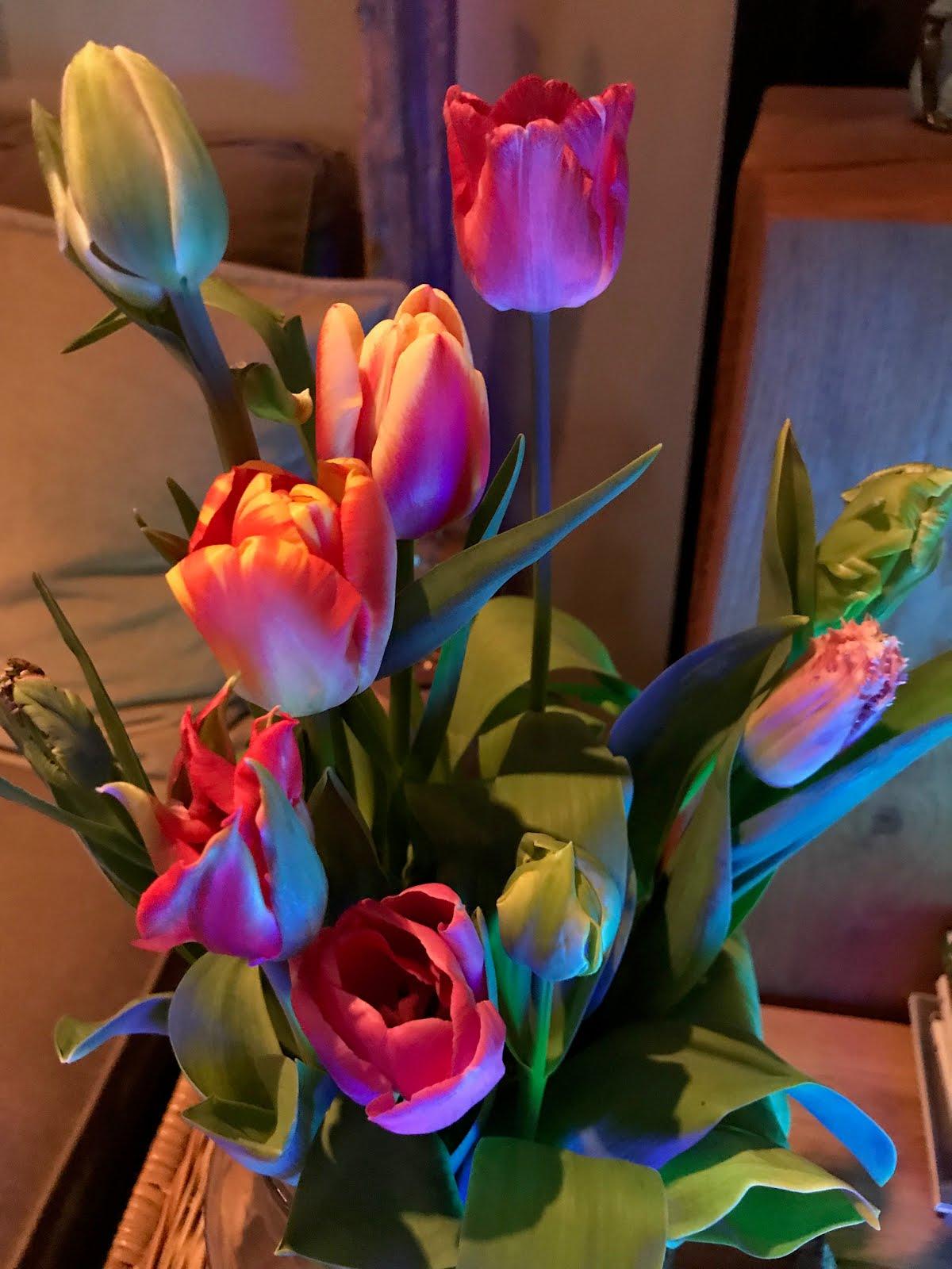 Tulpen van Hester