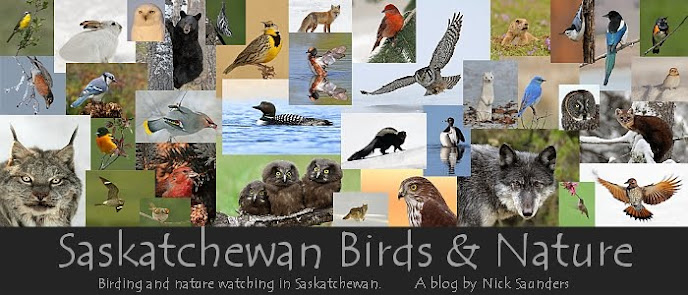 Saskatchewan Birds, Nature and Scenery