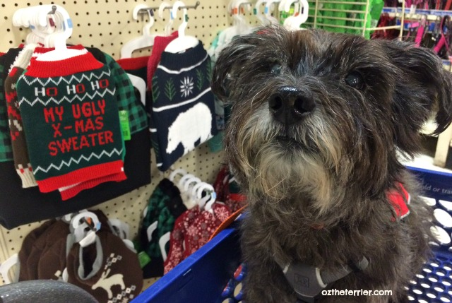 """Oz the Terrier shops at PetSmart and gets a Top Paw Holiday """"Ugly X-Mas Sweater"""" for dogs"""
