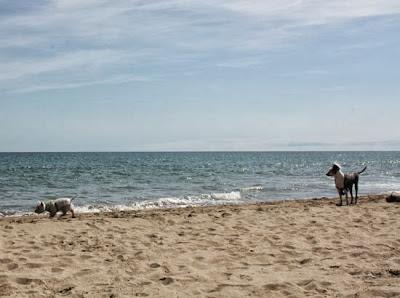 perros en la playa La Pletera