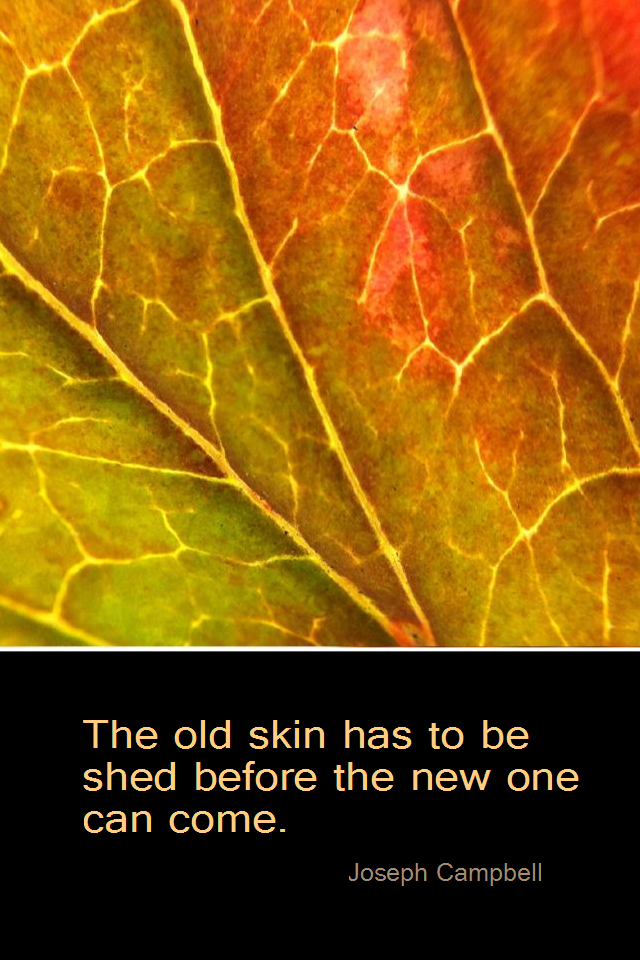 visual quote - image quotation for CHANGE - The old skin has to be shed before the new one can come. - Joseph Campbell