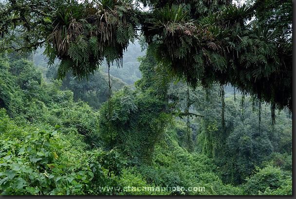 foto maqueta bosque: