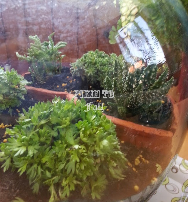 terrarium jar garden