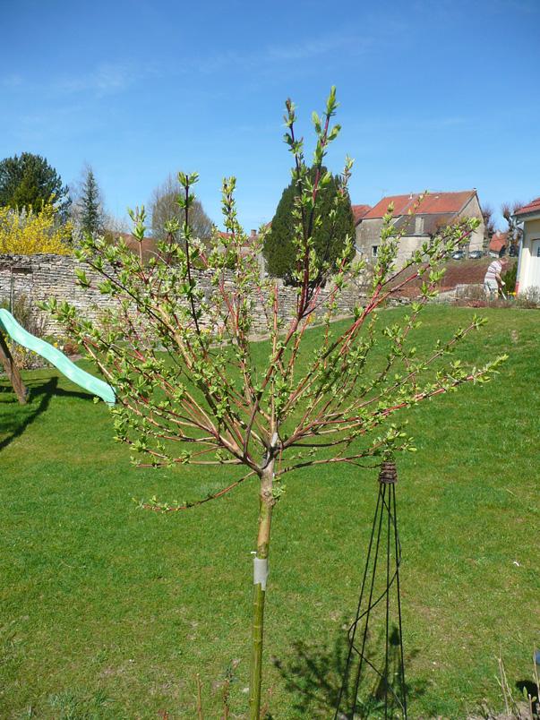 Notre jardin secret.: Début avril et 1er bilan.