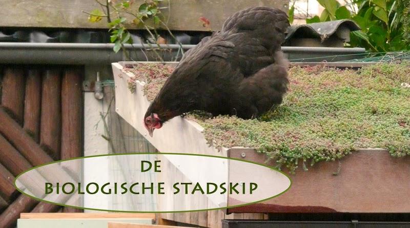 ziekte bij kippen