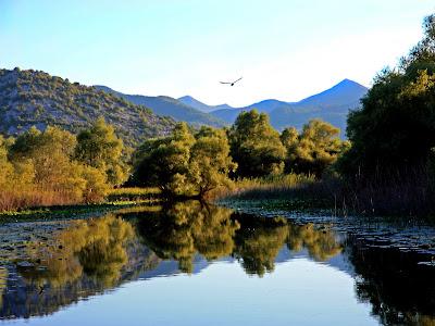 (Montenegro) - Skadar Lake