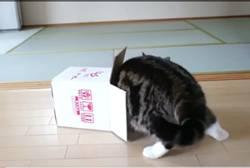 Videos Curiosos no blog O Gato Ninja