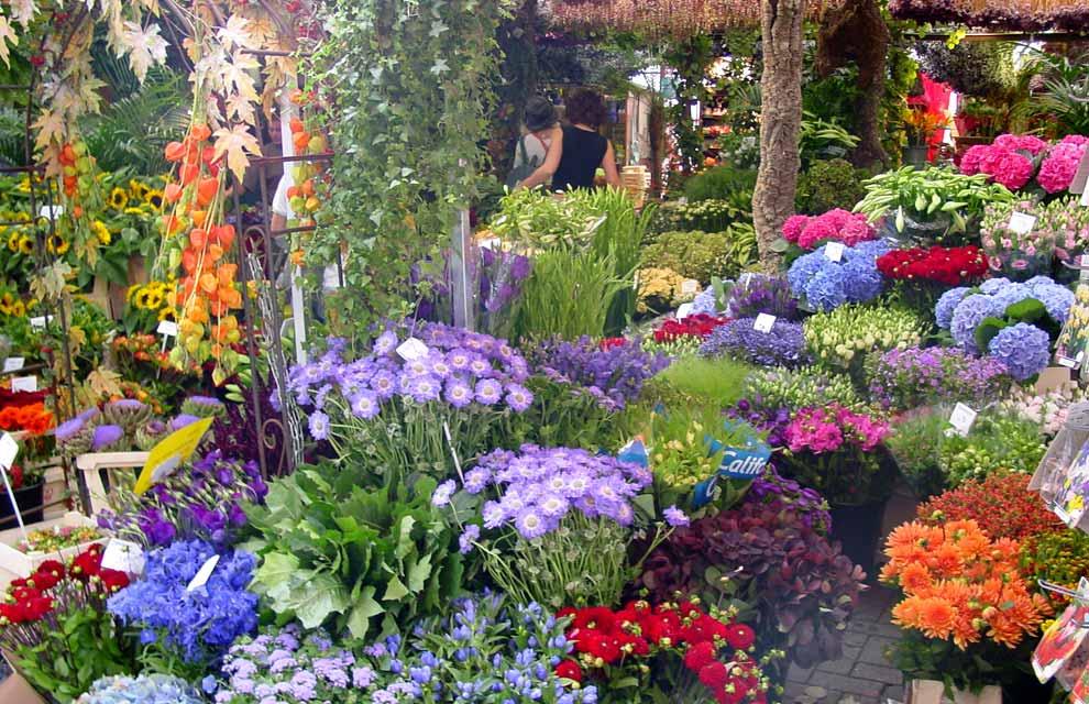 Das coisas que vejo e gosto os lindos campos de tulipas for Garden design 1920 s