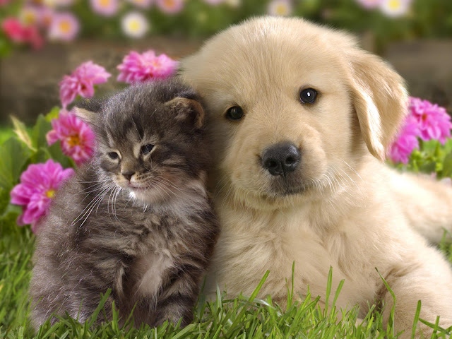 Cute Cat and Dog Real Friendship HD Wallpaper